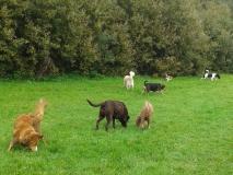 Allemaal op het grasveld